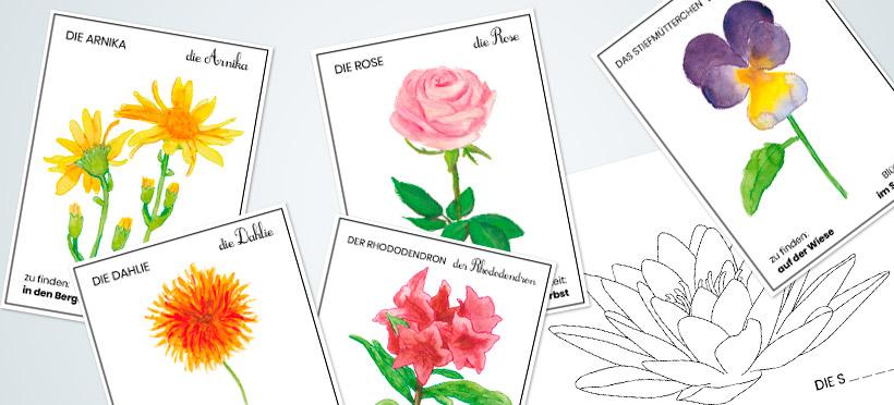 Die Namen der Blumen – Teil 2