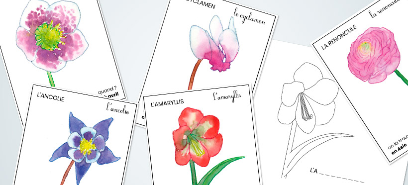 Apprendre le nom des fleurs – Partie 7