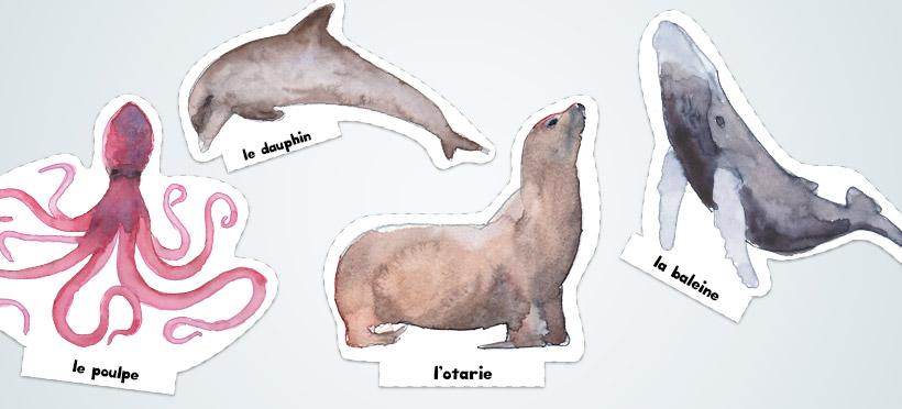 Les animaux marins – Partie 2