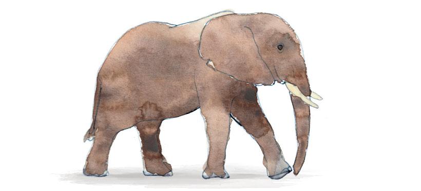 E comme Eléphant