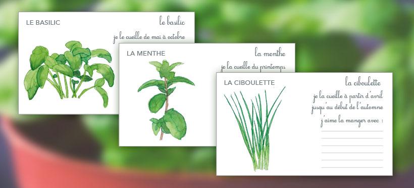 Les plantes aromatiques – Partie 1