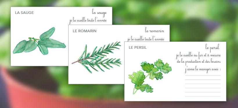 Les plantes aromatiques – Partie 2
