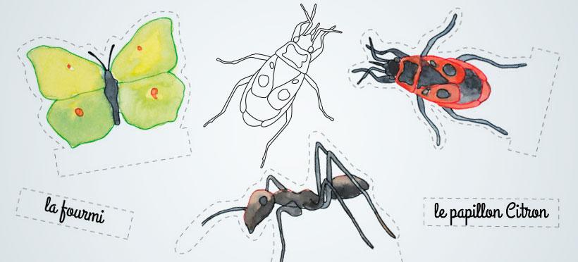 Le nom des insectes – Partie 2
